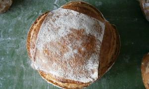 ¿Conoces el trigo Xeixa?