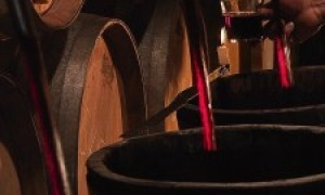 ¿Como se podría mejorar el consumo de vino en España?