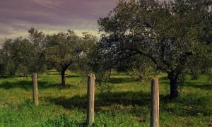 Oleoturismo, una propuesta emergente para los 'foodies'