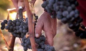 El vino es cultura y tradición