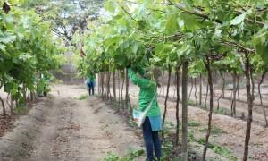 Las agroindustrias más importantes de Perú