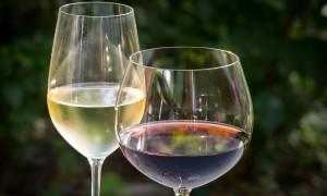10 vinos que debes probar