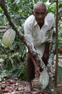 Tomás Gracia, productor de cacao
