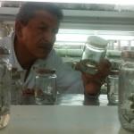 Iván Garzón, Ingeniero en Jefe del Departamento de Biotecnología del INIAP, revisa las plántulas de cacao Arriba.