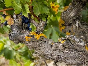 Ribera del Duero, tradición de buenos vinos