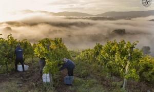 Los vinos gallegos