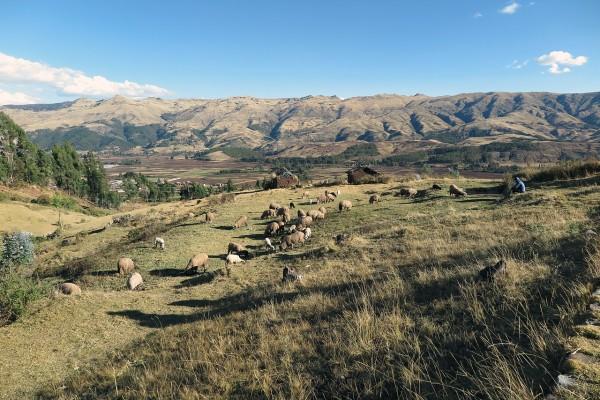 Perú posee cuatro zonas bien diferenciadas: costa, mar, sierra y selva