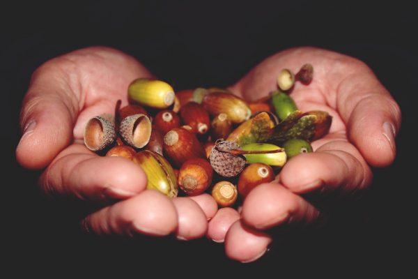 Si el jamón se ha alimentado de bellotas en la última fase de su vida, será más rico