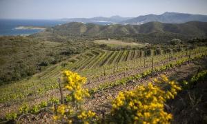 Empordà, los vinos de la Tramontana