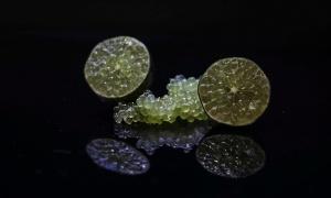 Caviar cítrico, el ingrediente del siglo XXI