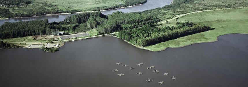 Black River Caviar cria los esturiones en la represa de Baygorria
