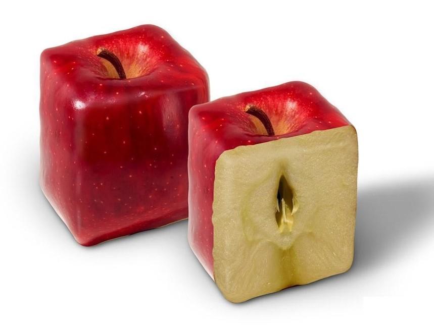 Manzanas cuadradas. Foto: Fruit Shaper
